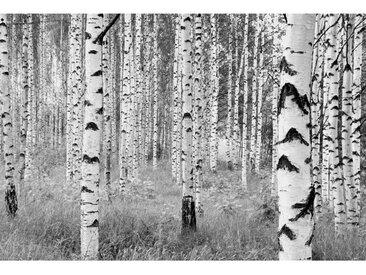 XXXLutz VLIESTAPETE , Weiß, Papier, Bäume, 368x248xcm cm