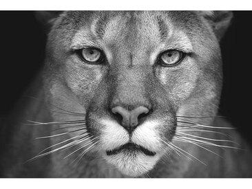 Euroart ACRYLGLASBILD Tiere , Weiß, Kunststoff, 80x120x1.70 cm