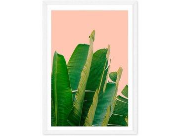 Banana Leaves, mit Rahmen (65 x 90 cm)