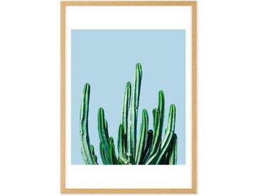 Cactus, Gerahmte Kunstdrucke (weitere Groessen erhaeltlich)