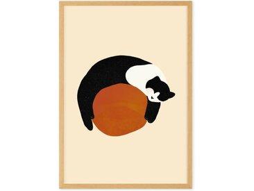 Sleepy Black & White Cat gerahmter Kunstdruck (A3), Mehrfarbig