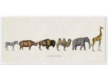 Vintage Quadrupedal Mammals from the Natural History Museum, gerahmter Kunstdruck (30 x 70 cm), Mehrfarbig und Weiss
