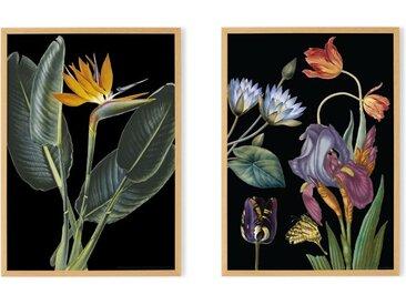 2 x Vintage Dark Florals from the Natural History Museum, gerahmte Kunstdrucke (A2), Mehrfarbig und Eiche
