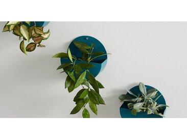 4 x Corolla Uebertoepfe, Blaugruen