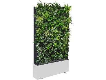 C+P Mobile Pflanzenwand für einseitige Bepflanzung mit Trays, b120xt40xh198cm