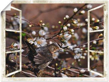 Artland Wandbild »Fensterblick - Kirschblüten mit Amsel«, Vögel (1 Stück), Poster