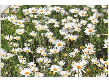 Artland Wandbild »Gänseblümchen«, Blumen (1 Stück), Wandaufkleber - Vinyl