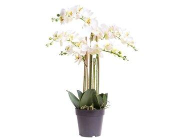 Botanic-Haus Kunstorchidee »Orchidee Bora« Orchidee, Höhe 60 cm