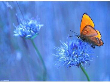 Tischsetmacher Platzset, »Tischsets I Platzsets - Oranger Schmetterling - 12 Stück aus hochwertigem Papier 44 x 32 cm«, (12-St)
