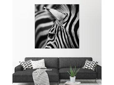 Posterlounge Wandbild, Zebra, Acrylglasbild