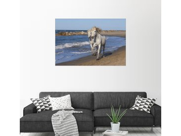 Posterlounge Wandbild, Camargue-Pferde am Strand, Premium-Poster