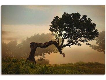 Artland Wandbild »Lorbeerbaum«, Bäume (1 Stück), in vielen Größen & Produktarten - Alubild / Outdoorbild für den Außenbereich, Leinwandbild, Poster