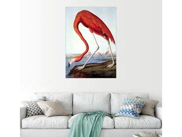 Posterlounge Wandbild, American Flamingo, Premium-Poster