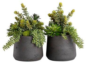 Blütenwerk Kunstblume »Duo Sukkulenten«, Höhe 30 cm, 2er-Set