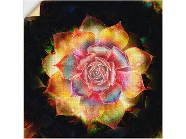 Artland Wandbild »Hauswurz«, Pflanzen (1 Stück), Wandaufkleber - Vinyl