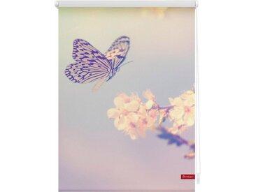 LICHTBLICK Seitenzugrollo »Klemmfix Motiv Schmetterling«, Lichtschutz, ohne Bohren, freihängend, bedruckt