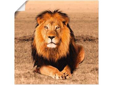 Artland Wandbild »Löwe«, Wildtiere (1 Stück), Poster