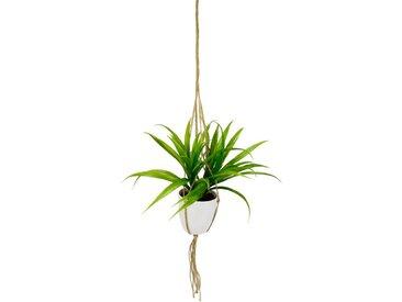 Künstliche Zimmerpflanze »Dracena«, höhe 35 Zentimeter, in Hängeampel