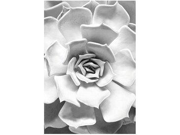 Komar KOMAR XXL Poster »Succulent Closeup«, bunt, 30 cm x 40 cm, bunt