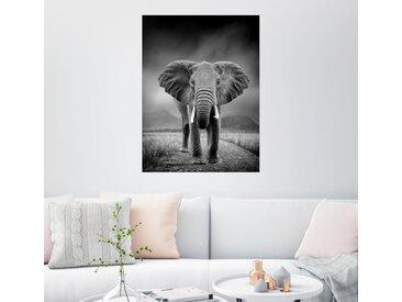 Posterlounge Wandbild, Elefant auf schwarzem Hintergrund, Premium-Poster