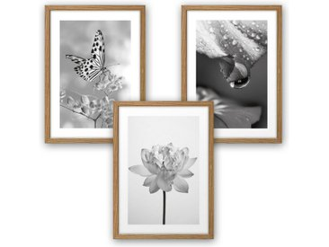 Kreative Feder Poster, Natur, Blüte, Pflanze, Schmetterling, Schwarz-Weiß, Fotografie (Set, 3 Stück), 3-teiliges Poster-Set, Kunstdruck, Wandbild, wahlw. in DIN A4 / A3, 3-WP100
