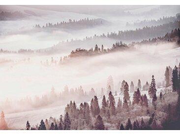 Consalnet Vliestapete »Waldlandschaft im Nebel«