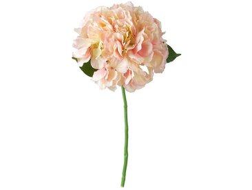 BUTLERS Kunstblume »FLORISTA«, Höhe 40 cm, Rosé