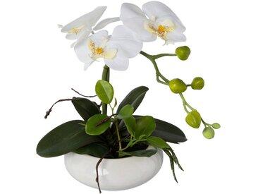 Creativ green Kunstorchidee »Phalaenopsis«, Höhe 32 cm, in Keramikschale