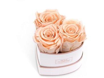 Holy Flowers Kunstblume »Rosenbox Herz mit Infinity Rosen I 3 Jahre haltbar I Echte, duftende konservierte Blumen in der Rosé Gold Edition I by Raul Richter« Rose, Höhe 6 cm