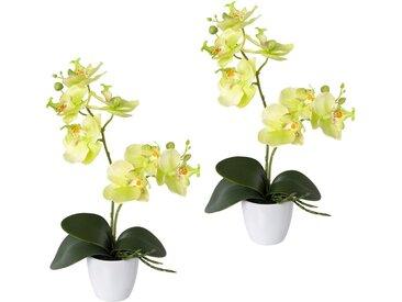 Creativ green Kunstorchidee »Phalaenopsis«, Höhe 36 cm, 2er Set, im Kunststofftopf, grün, grün