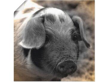 Artland Wandbild »Ferkel Kontakt«, Haustiere (1 Stück), Poster