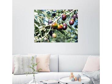 Posterlounge Wandbild, Olivenbaum im Sonnenlicht, Premium-Poster
