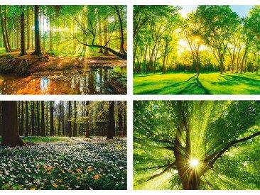 Artland Poster »Wald Bach Frühling Windrosen Sonne Baum«, Wald (4 Stück), Poster, Wandbild, Bild, Wandposter