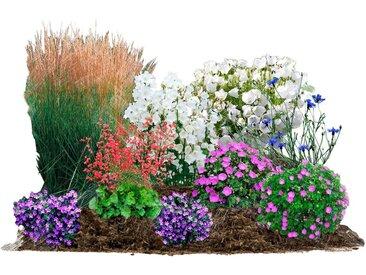 BCM Beetpflanze »Blütenzauber« Set, 9 Pflanzen