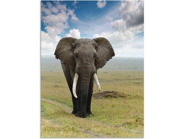 Artland Wandbild »Elefant«, Wildtiere (1 Stück), in vielen Größen & Produktarten - Alubild / Outdoorbild für den Außenbereich, Leinwandbild, Poster