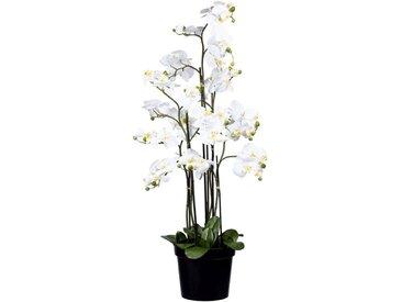 Creativ green Kunstorchidee »Phalaenopsis« Orchidee Phalaenopsis, Höhe 130 cm, weiß, weiß