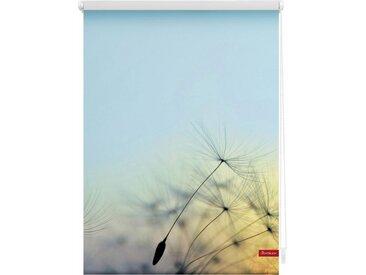 LICHTBLICK Seitenzugrollo »Klemmfix Motiv Pusteblume«, Lichtschutz, ohne Bohren, freihängend, bedruckt