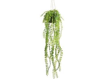Botanic-Haus Künstliche Zimmerpflanze »Ficus-Pumila-Hängeampel«, Höhe 60 cm