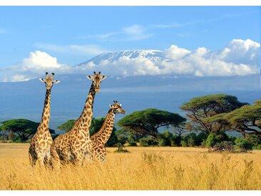 Papermoon Fototapete »Giraffes at Kilimanjaro«, glatt, 4 St.