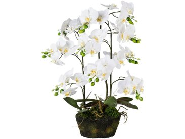 Creativ green Kunstorchidee »Phalaenopsis«, Höhe 70 cm, im Moosballen