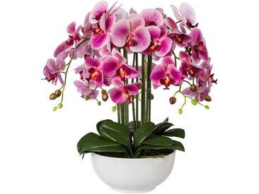 Creativ green Kunstpflanze Orchidee, Höhe 54 cm, rosa, rosa