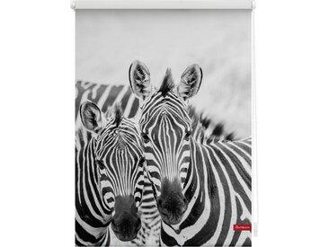 LICHTBLICK Seitenzugrollo »Klemmfix Motiv Zebra«, Lichtschutz, ohne Bohren, freihängend, bedruckt