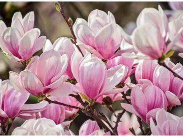 Papermoon Fototapete »Magnolia Flowers«, glatt, 5 St.