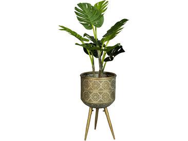 Blumentopf - Botanique M