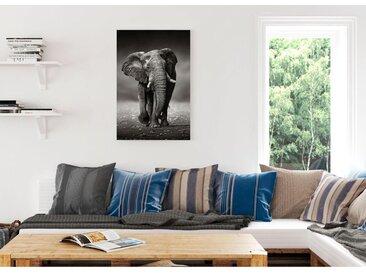 Bild Elefant Wanderung