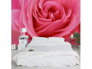 Vliestapete Lustful Pink Rose