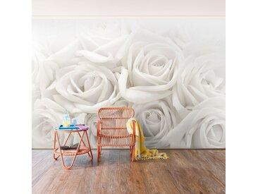 Vliestapete Weiße Rosen