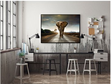 Bild Taira Elefant