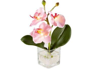 LED Kunstblume Orchidee rosa bonprix