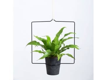 DraadZaken Quadra Hanging Planter Blumenampel schwarz 30 cm
